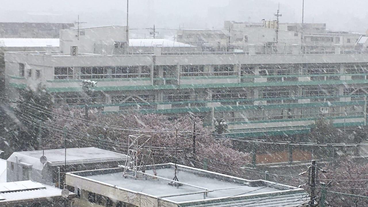 大雪警報!!桜と雪のコラボは綺麗ですが・・JR中央線など電車の遅延も注意してください。